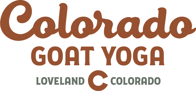 Colorado Goat Yoga
